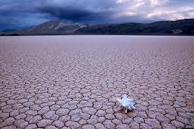 dia mundial de lucha contra la sequía