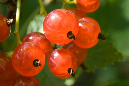 245549-Frutas-Silvestres-3