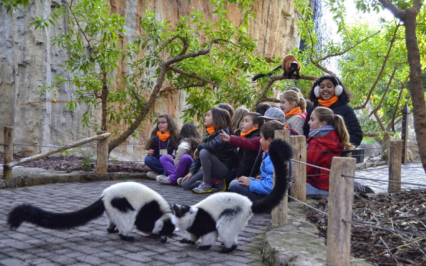 Niños y niñas de Expedición África observando a los lémures - Navidad en Bioparc Valencia - 2014 (Copiar)