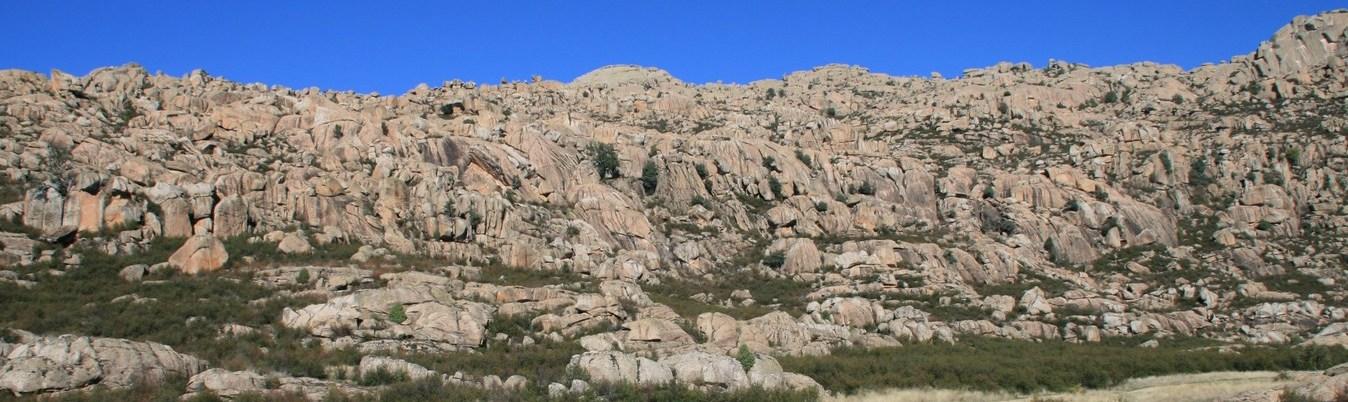 Zona de plantación en La Pedriza (Copiar)